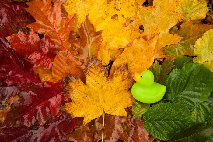 De bladeren zijn nat. Vooral bij de rode bladeren zie je dat het water het licht reflecteert.