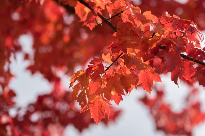 Kijk in je direct omgeving waar je de herfstkleuren duidelijk ziet. Zoom in om storende elementen buiten beeld te houden en zo echt de aandacht te leggen op de herfstkleuren.