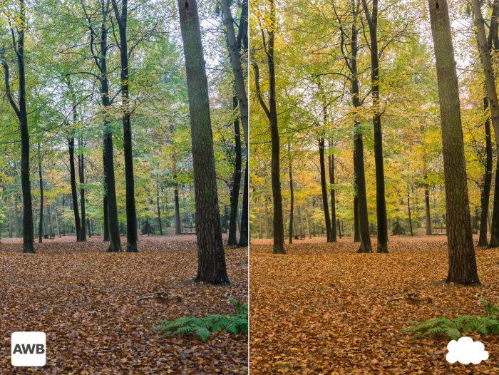 Witbalansinstelling bij de herfst