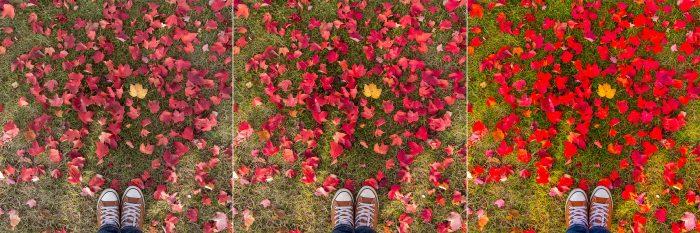 Herfstfoto's bewerken voor de mooiste kleur