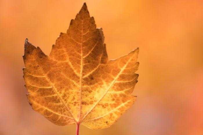 Kijk ook naar de achtergrond; de gekleurde bladeren in de zon zorgde voor een mooie oranjebruine kleur.