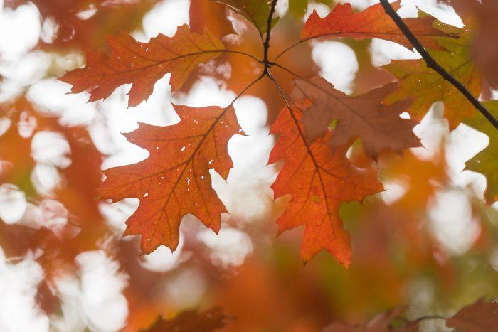 Herfstbladeren tegen een lichte lucht
