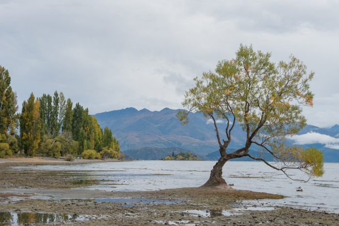 Bewolkte ochtend in Wanaka, Nieuw-Zeeland.