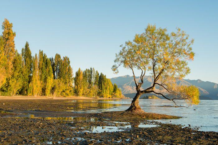 Zelfde plaats, andere ochtend. Het warme zonlicht vlak na zonsopkomst versterkt de herfstkleuren in de bomen.