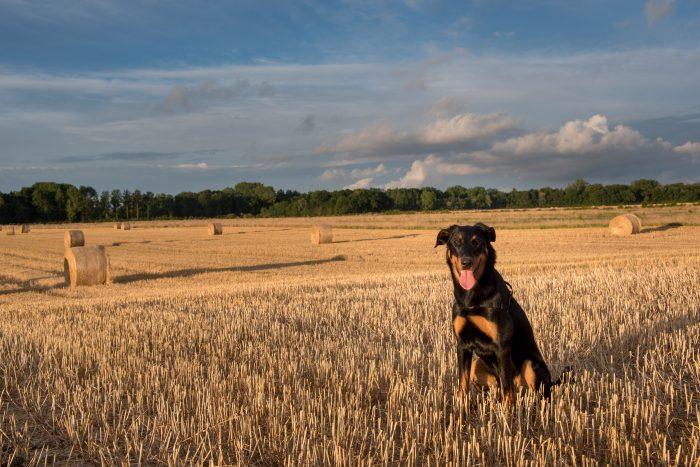 JJ poseert in het graanveld in Frankrijk. Het licht geeft een mooie warme sfeer (gouden uurtje) aan de foto.