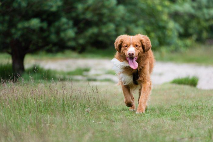 Buiten is er vaak meer licht dan binnen, dat maakt het fotograferen makkelijker. Ook is er meer bewegingsruimte en kan je hond lekker rennen en spelen.