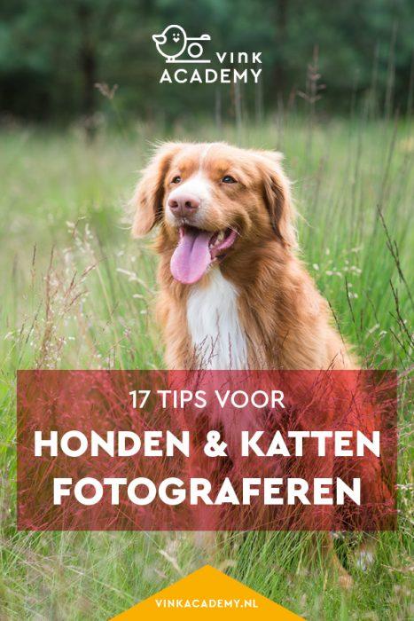 Honden en katten fotograferen