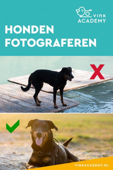 Huisdieren fotograferen; vermijd grote contrasten in licht