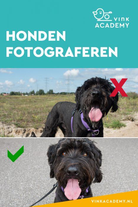 Vermijd hard zonlicht bij het fotograferen van je hond