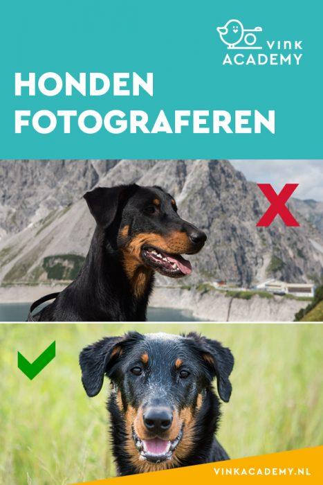 Zo fotografeer je je hond