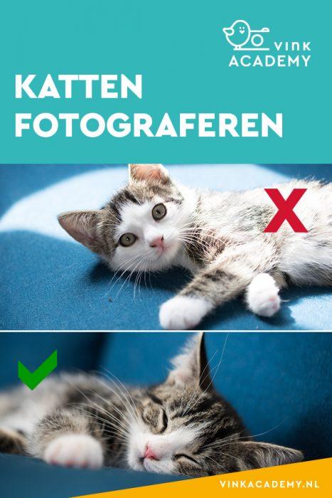 Tips om je katten te fotograferen; vermijd hoog contrast in licht