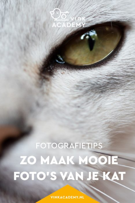 Close-up foto van kattenoog