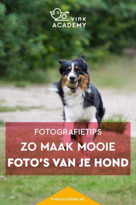 Huisdier fotograferen