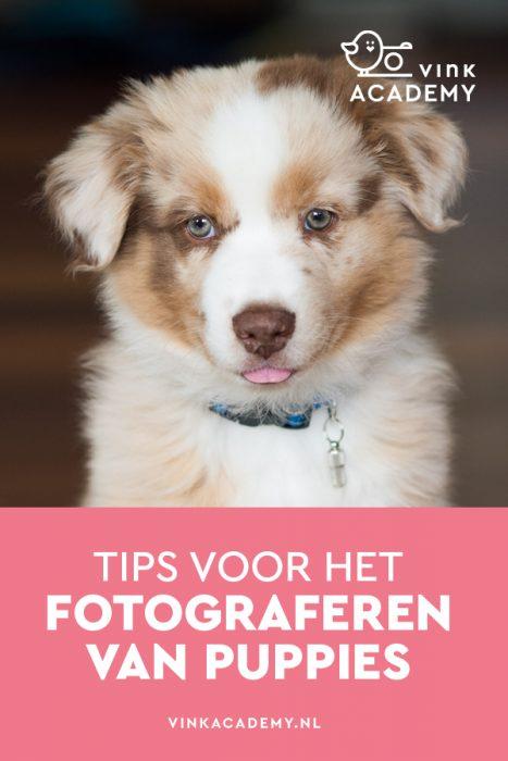 Tips voor het fotograferen van puppies
