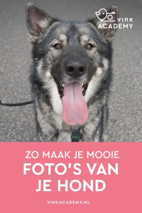 Hond fotograferen