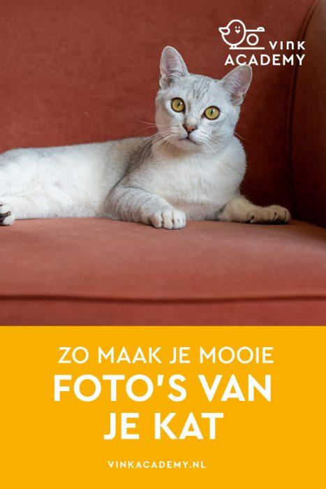 Zo fotografeer je je kat in huis