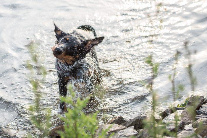 Na het zwemmen, altijd even uitschudden! Ook hier bevries je de beweging met een korte sluitertijd!