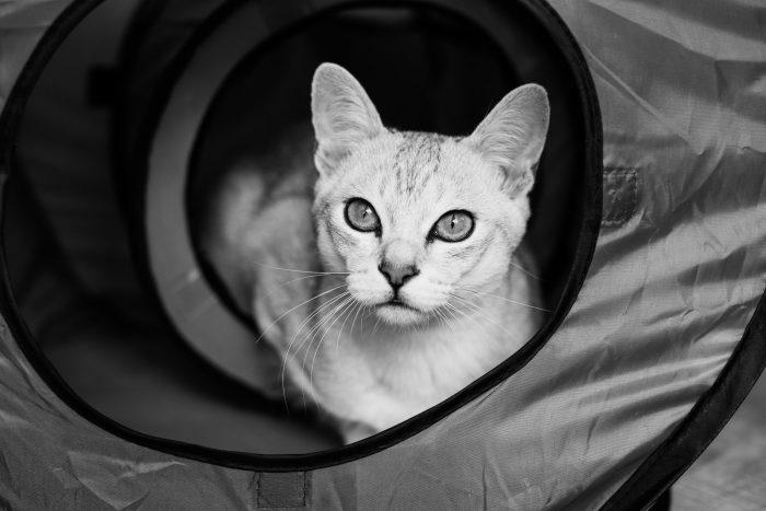 Hier steekt Boris zijn hoofd uit de speeltunnel en kijkt naar het raam. Er is meer licht en zijn pupillen veranderen in kleine streepjes.
