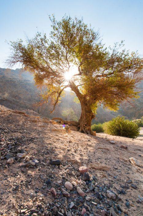 jordanie-laura-vink-6039
