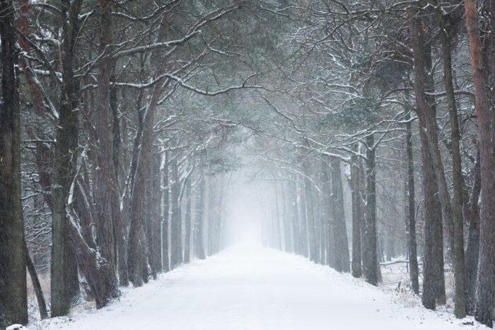Weg door het bos terwijl het sneeuwt