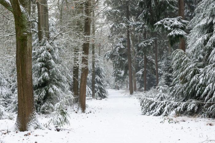 Bos in de verse sneeuw