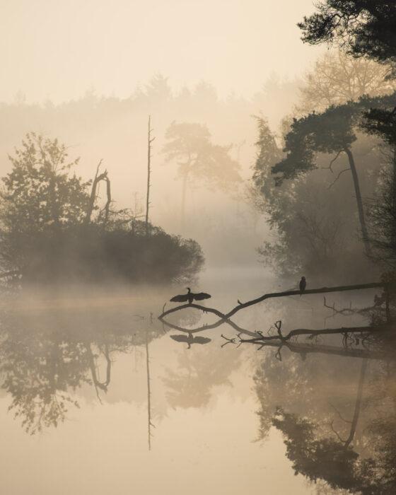Landschap met water in de mist, aalsgolver met gespreidde vleugels als silhouet gefotografeerd