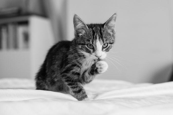 Kattenfotografie in huis: fotografietips en inspiratie