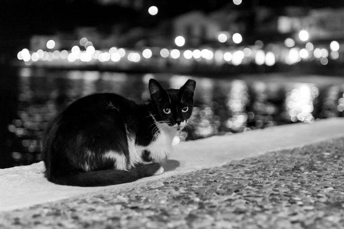 Omdat ik deze foto 's avonds maakte, had de kat veel grotere pupillen dan overdag.