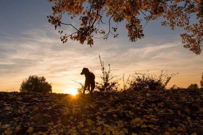 Een zonsondergang in de herfst gefotografeerd. Door het diafragma te knijpen maak ik van de zon een stervorm.