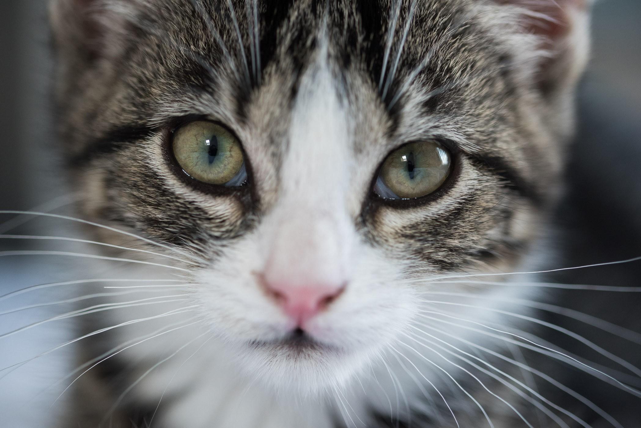 Scherpstellen op de ogen bij het fotograferen van honden en katten