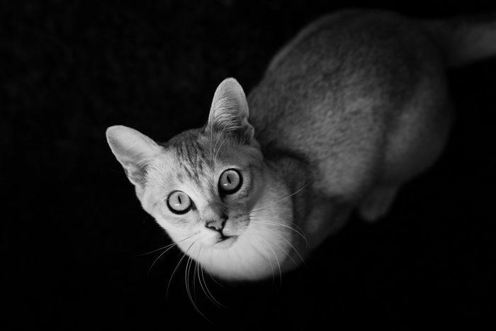 Studiofotografie honden en katten