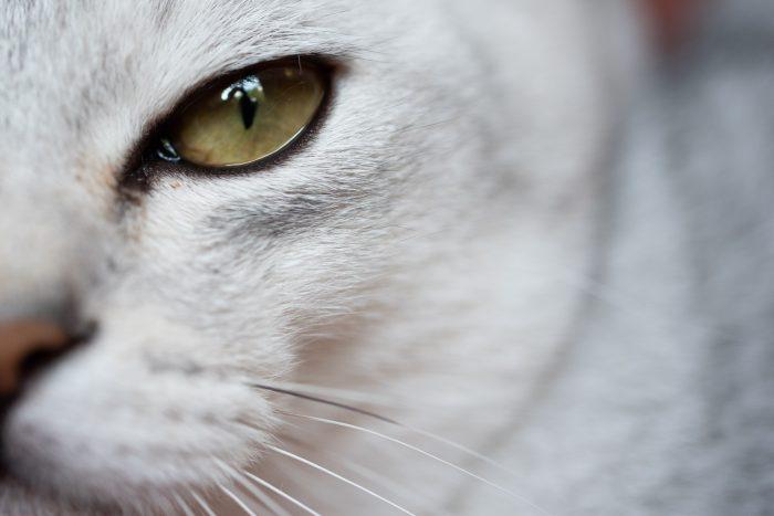 Om dit kattenoog van zo dichtbij te fotograferen gebruikte ik een macro-objectief.