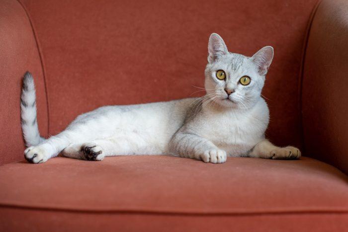 Is een kat niet gewend om naar buiten te gaan? Blijf dan vooral binnen als je foto's gaat maken en zoek de mooiste plekken in huis op.