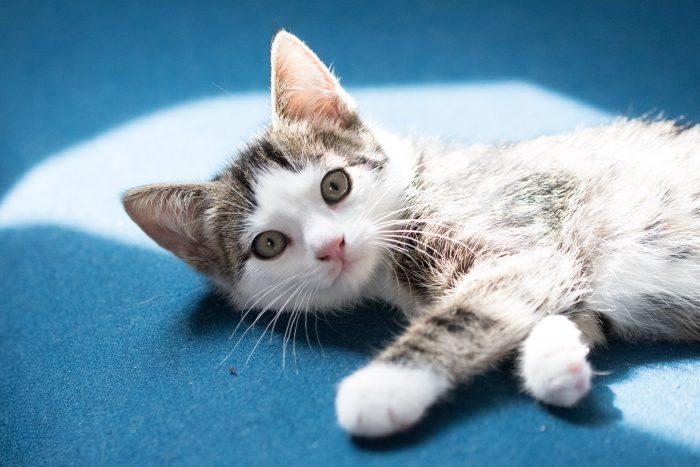 Deze belichting, waarbij de kat half in de zon licht en deels in de schaduw, is heel lastig voor je camera. De vacht van de kitten is nu daarom veel te licht.
