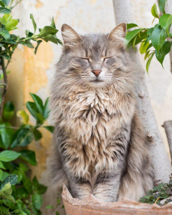 Foto van straatkat met mooie groen ogen, gefotografeerd in Athene Griekenland