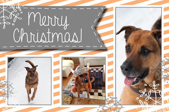 Kerstkaart met foto's van je huisdier