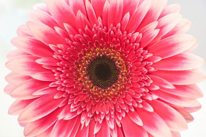 Bloemen fotograferen bij keukenhof