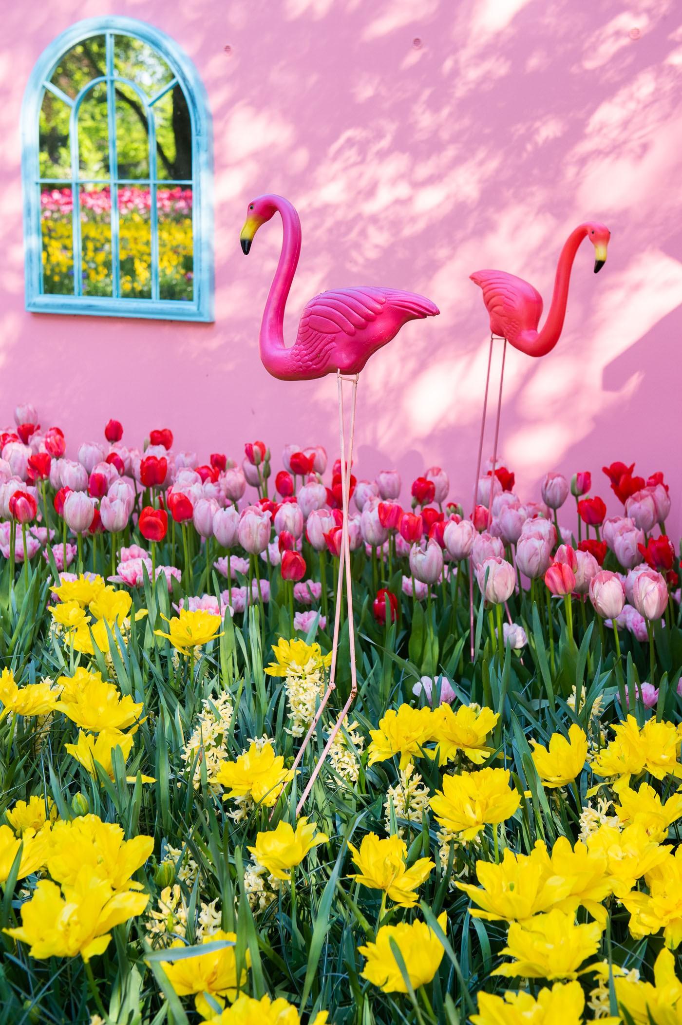 Grappige opstelling van bloemen en flamingo's in de keukenhof van 2018
