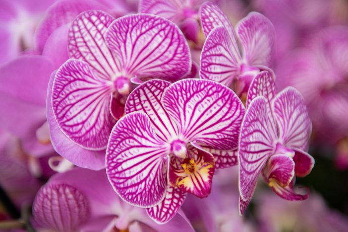 Orchideen fotograferen