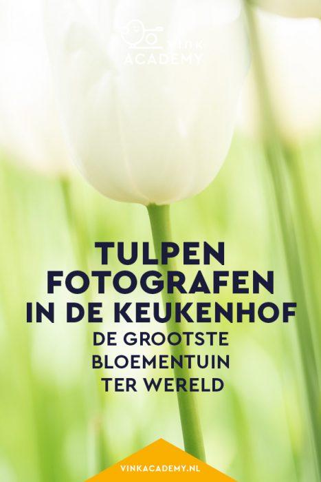 Tulpen, narcissen en andere voorjaarsbloemen in de Keukenhof
