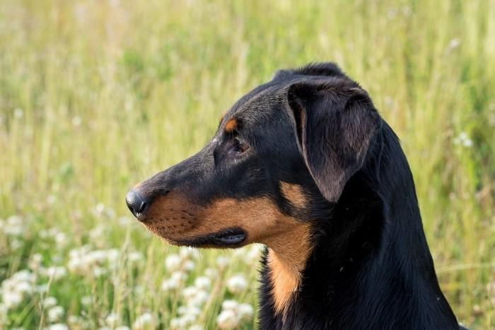 Kijkruimte kun je ook toepassen bij dierenfotografie, zoals bij het fotograferen van je hond of kat.