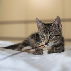 Kittens fotograferen