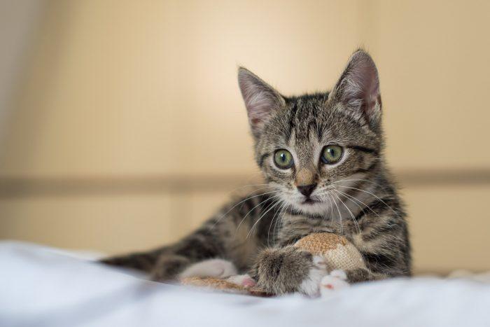 Ik fotografeerde deze kitten met diafragma f/2.8. Er is weinig scherptediepte, de achtergrond is wazig.