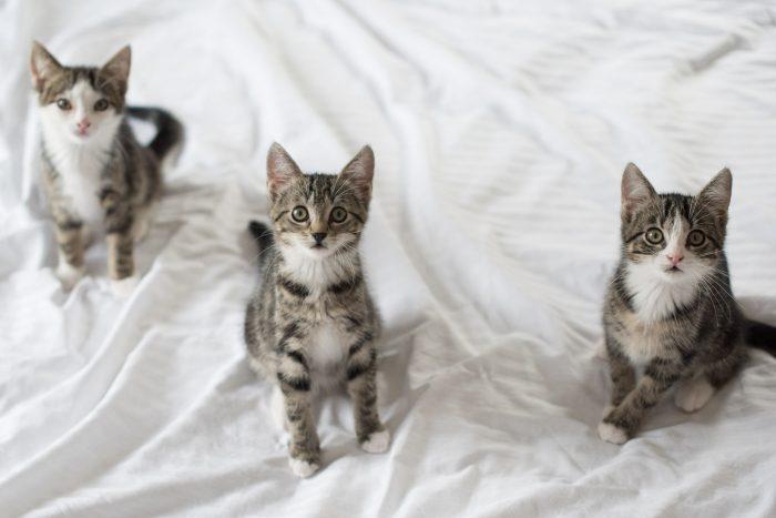 Jaaaa, de aandacht van drie kittens tegelijk! Man man, dat was een klus zeg... Gelukkig deed mijn assistent iets heel interessants vlak boven mijn hoofd.