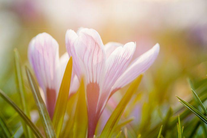 Lensflare bij bloemenfoto's