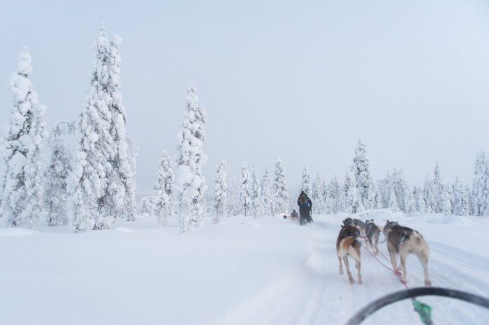Fotograferen terwijl de honden voor je uit rennen was nog best lastig, omdat de weg vol sneeuwhobbels zit!