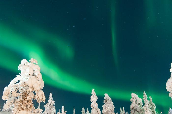 Het noorderlicht in Lapland boven besneeuwde boomtoppen