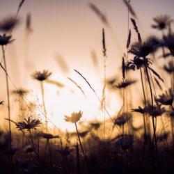 Silhouetten bij zonsondergang