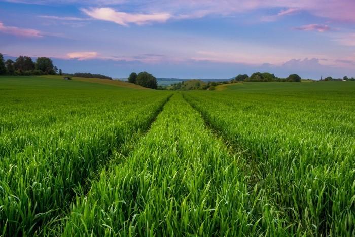 Weiland met hoog, groen gras