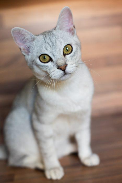 Deze kat fotografeerde ik met een 50mm lens.
